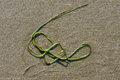 grass, Pacific Rim National Park, British Columbia, Canada, beach, Schooner Cove