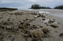 canada, british columbia, pacific rim provincial park, schooner cove, beach, tide