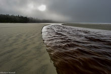 Combers Beach, British Columbia, Canada, Pacific Rim National Park, fog, morning