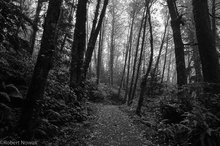 forest, trail, Pacific Rim National Park, British Columbia, Canada, fog, Combers Beach, morning