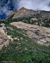 Rocky Mountain National Park, Mahana Peak, Colorado, wildflowers