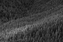 Baker Snoqualmie National Forest, Alpine Lake Wilderness, Washington, Tonga Ridge, forest, valley