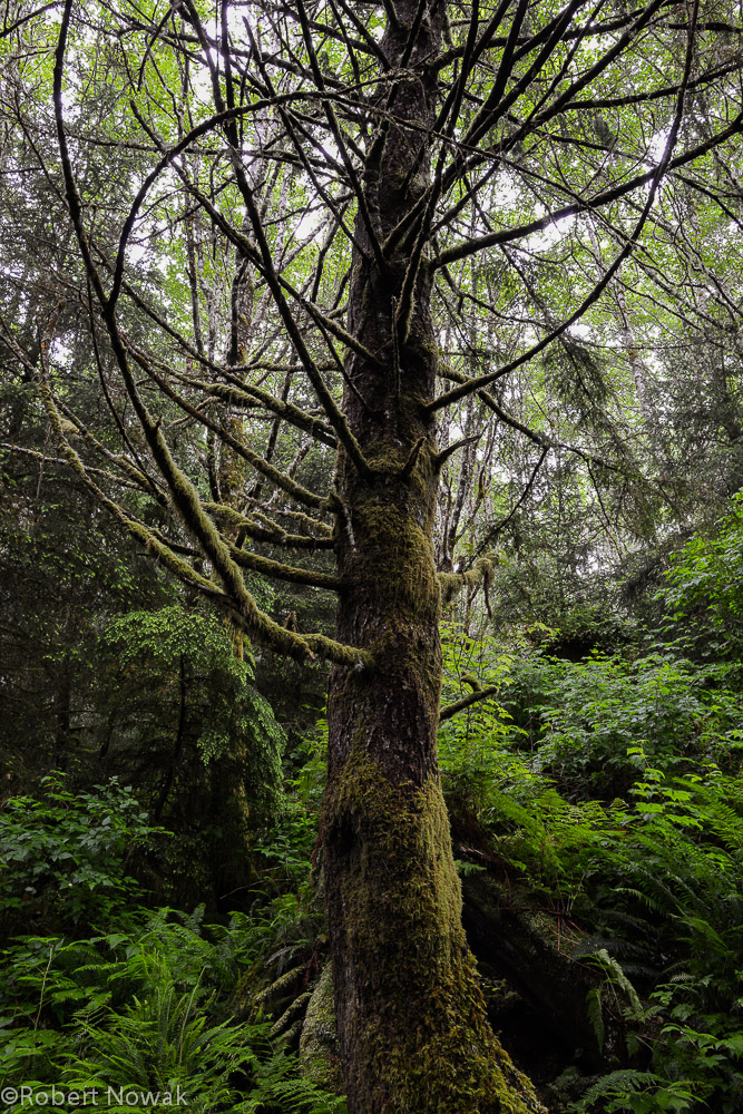 coastal, forest, canada, british columbia, pacific rim provincial park, forest, Vancouver island, coast, photo