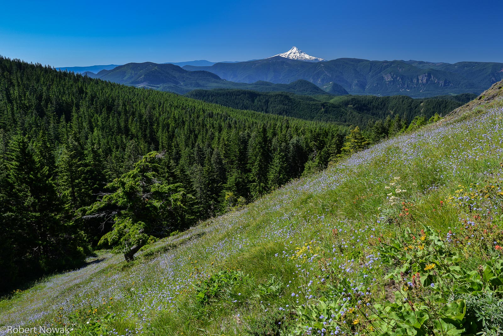 Looking south towards Mt. Hood from the slopes of Grassy Knoll.